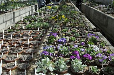 Växtbäddar. Foto: Bernt Svensson