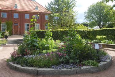 Sommarblommorna har kommit på plats. Foto: Sylvia Svensson