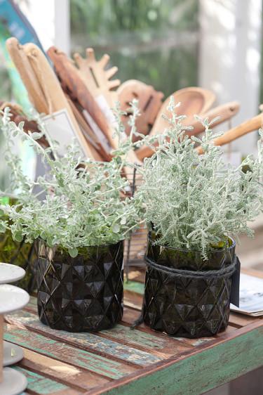 Rabatteternell och grå helgonört i lykta.Foto: Blomsterfrämjandet