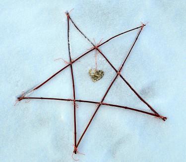 Enklaste möjliga pyssel - en stjärna av korallkornellArr + foto: Sylvia Svensson