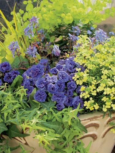 Vårflirtskombination 4. Foto: Blomsterfrämjandet, Hörnhems.