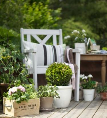 Trendtips inför 2012: Blomstrande enkelhet. Foto: Blomsterfrämjandet/Gustaf Emanuelsson