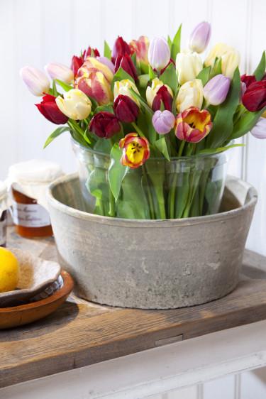 Tulpaner i milda färger placerade i dubbla vaser. Foto: Blomsterfrämjandet