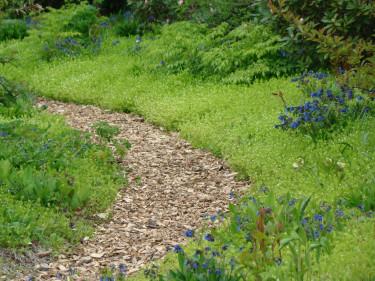 Vid sidan av gången är marken täckt av myskmadra i stället för av en gräsremsa som ska klippas och kantskäras.