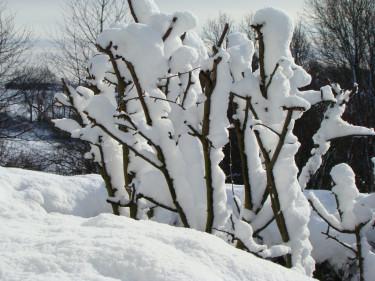 Bilden är inte från Helen i Piteå utan från en annan snöig trädgård i mars. Vi lever i olika trädgårdsvärldar så här års!
