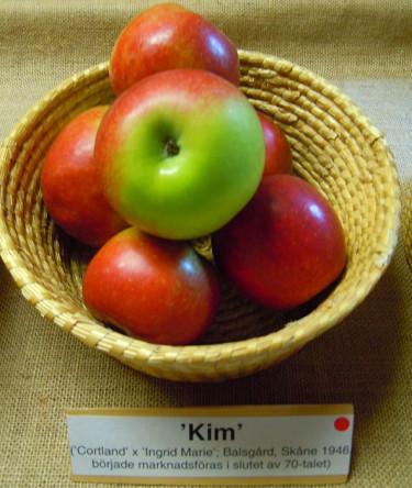 'Kim'. Foto: Bernt Svensson