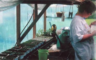 Det finns många olika sätt att föröka växter.