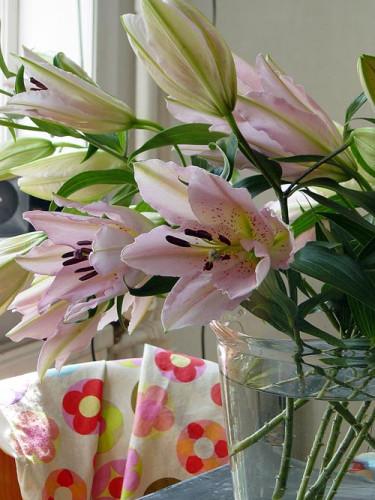 Lilja, _Lilium_. Foto: Blomsterfrämjandet.