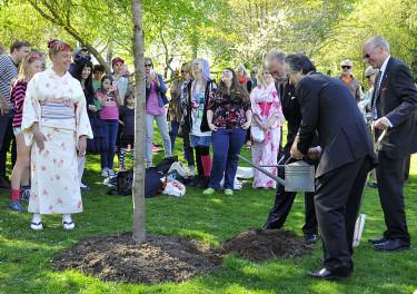 Ett japanskt körsbärsträd planterades också. Foto: Bernt Svensson