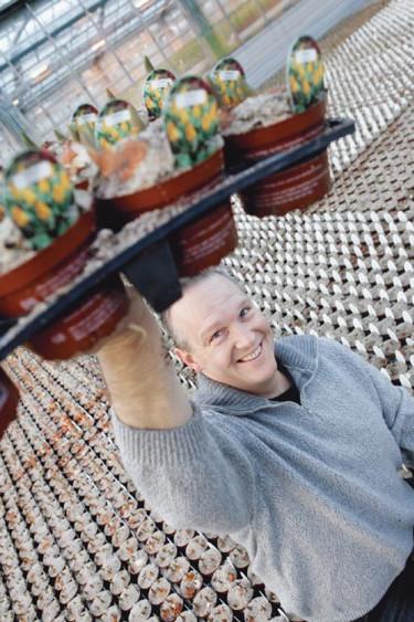 Henning Pedersen, som äger Gartneriet Pedersen, fick idén att odla lökväxter som krukväxter i början av 90-talet.