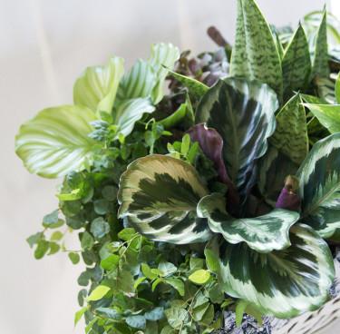 Mixade gröna växter. Foto:Blomsterfrämjandet.