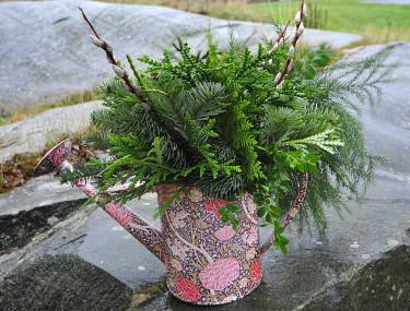 Julklapp till en trädgårdsvän! Vacker kanna med vintergröna kvistar. Foto: Bernt Svensson Arr: Sylvia Svensson