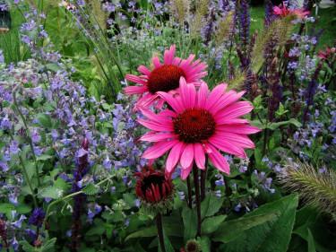 Olika färg och form på växterna kittlar fantasin.
