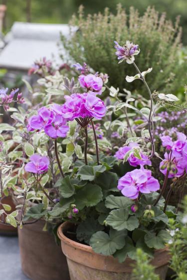 Blomsterfrämjandet/Annika Christensen