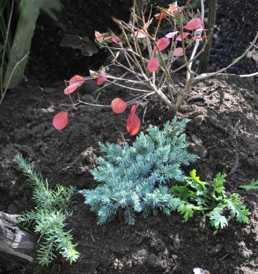 Jordhög med jordslagna växter Foto: Sylvia Svensson