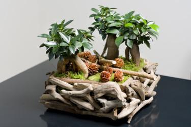 Bonsaiträd på ett nytt sätt. Foto: Floradania