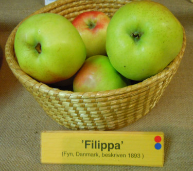 'Filippa'. Foto: Sylvia Svensson