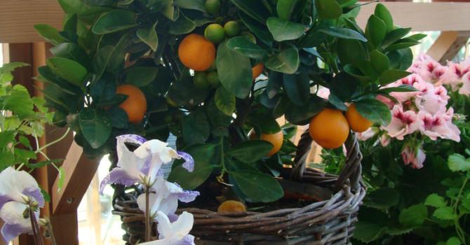 Visst är det något speciellt med citrus!