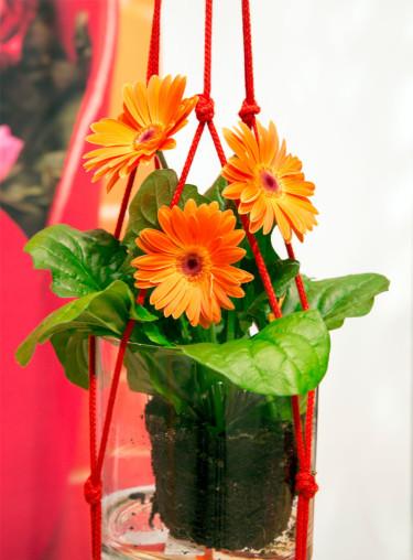 Gerbera i ampel Foto: Floradania