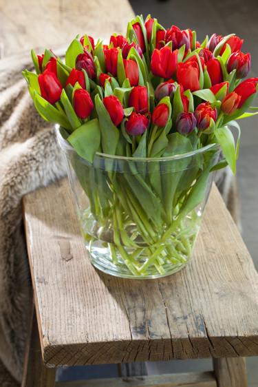 Röda tulpaner är klassiskt och oerhört vackert. Foto: Blomsterfrämjandet