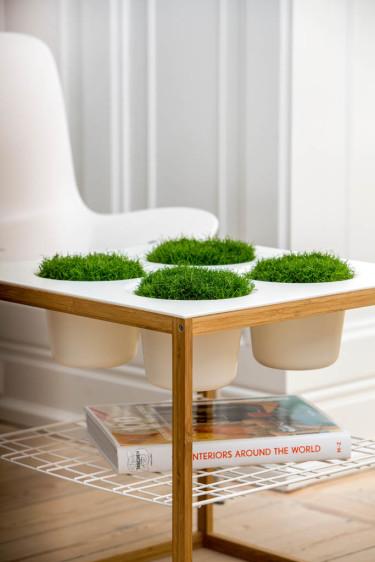 Växterna blir allt mer en del av inredningen. Gör om soffbordet till en liten gräsmatta under vinterhalvåret med Sagina procumbens,  Foto: Floradania