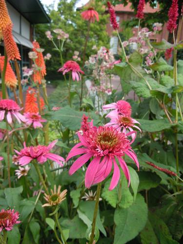 Prova ihop färgerna i plantskolan. Foto: Sylvia Svensson