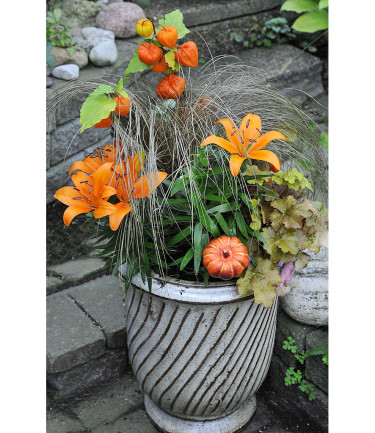 Orange asiatiska liljor med judekörs, bronsstarr och alunrot.Arrangemang: Sylvia Svensson Foto: Bernt Svensson