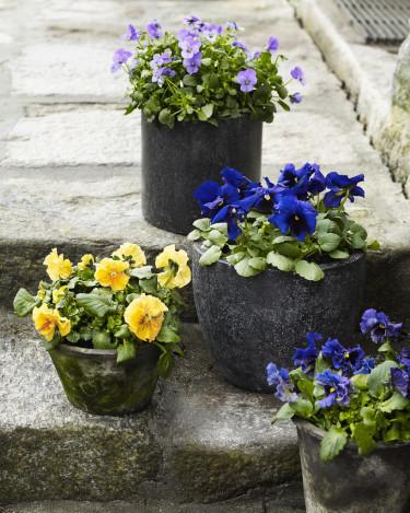 Våren har kommit till trappan med violer och penséer. Foto: Floradania