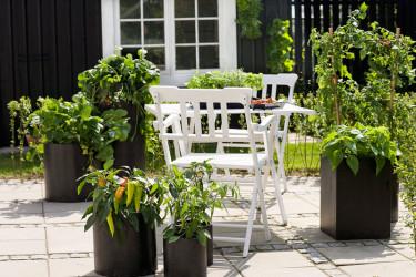 Kryddörter på terrassen.