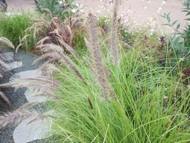 Dekorationsgräs i rabatten. Foto: Sylvia Svensson