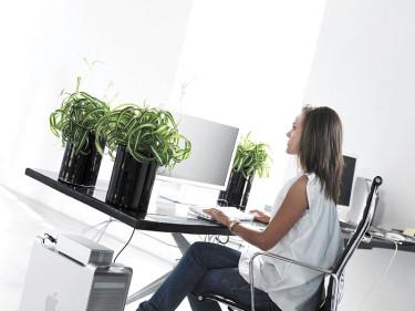 En undersökning från Washington State University har bevisat att folk som jobbar på gröna kontor har lägre blodtryck och kortare reaktionstid och drabbas inte lika ofta av stress som folk i miljöer som saknar växter.
