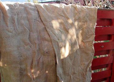 Täck över känsliga klätterrosor Foto: Sylvia Svensson