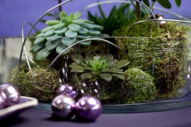 Adventstips som är vintrigt, vackert, hållbart och enkelt att göra! Foto: Blomsterfrämjandet