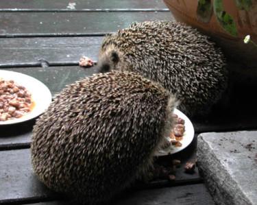 Kompisfrukost! Foto: Sylvia Svensson