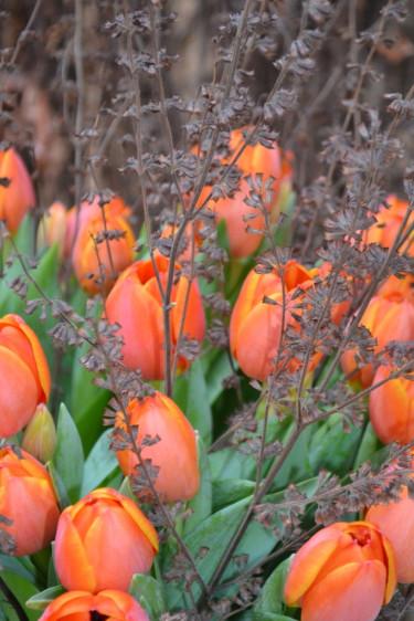 Torra perenner från trädgården i tulpanbukett Foto: Blomsterfrämjandet