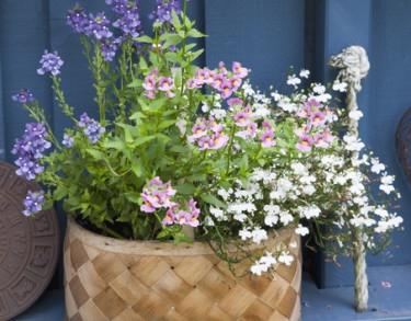 En härlig sommarblommande korg! Foto Blomsterfrämjandet