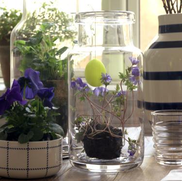 Sätt växter i glasvaser. Mycket vackert!  Foto: Sofie Helsted och Mille Fly