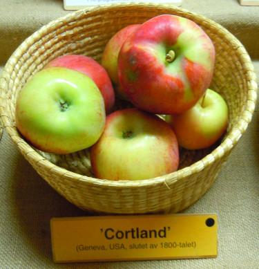 'Cortland'. Foto: Sylvia Svensson