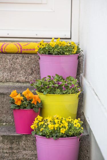 Vilken färg och form du väljer på krukorna till entrén avgör intrycket din vårhälsning gör. Foto: Floradania