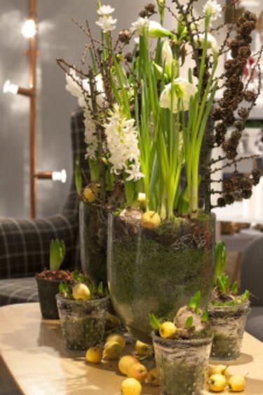 Samplanterade lökväxter och gula prydnadsäpplen. Foto: Blomsterfrämjandet/Anna Skoog