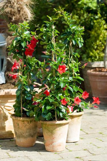 Fyll krukorna med spännande växter.