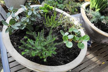 Pyttesmå surjordsväxter på tillväxt.
