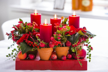 Julstjärna + Kristi törnekrona + hjärtrotsgömma (Dischidia ruscifolia) med dekoration Foto: Floradania