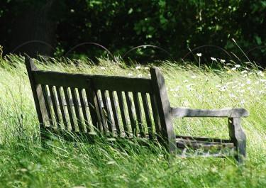 Vem vill inte slå sig ner här och bara vara? Kristina Bonander delar generöst med sig till läsarna på Odla.nu av sin kunskap om naturträdgården.