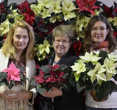 Julstjärnan ger glädje… Malin Hidesäter, Eva Anflo & Erika Wallin från Blomsterfrämjandet Foto: Blomsterfrämjandet