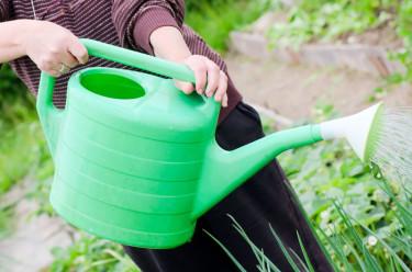 Rätt näringsbalans är A och O när växterna ska vattengödslas, både för prydnadsväxternas och den omgivande naturens skull. Foto: Testfakta