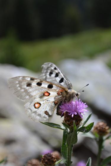 Fjärilar trivs i värme. Foto: Blomsterfrämjandet