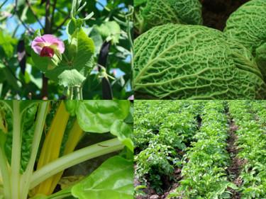 Det finns mycket att välja på till grönsakslandet.