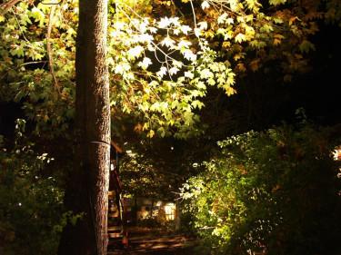Belys trädet nerifrån.Foto: Sylvia Svensson