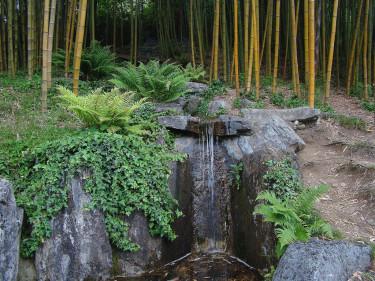 Bambu. Här finner man 3 000 kvm med minst 25 olika sorter av bambu planterade enligt japanska principer och tekniker.